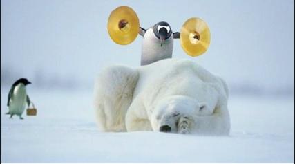 Pinguino puñetero